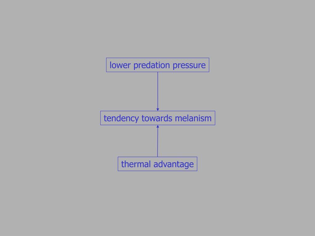 lower predation pressure