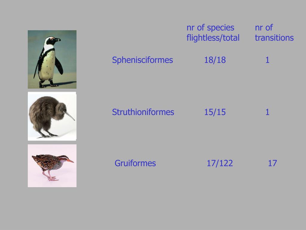 Sphenisciformes 18/181