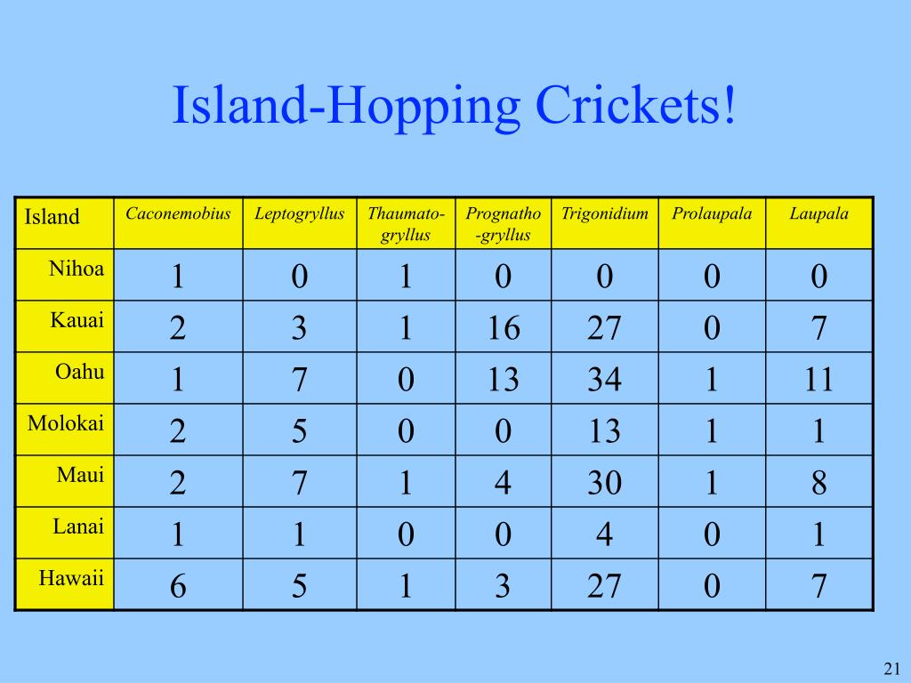 Island-Hopping Crickets!