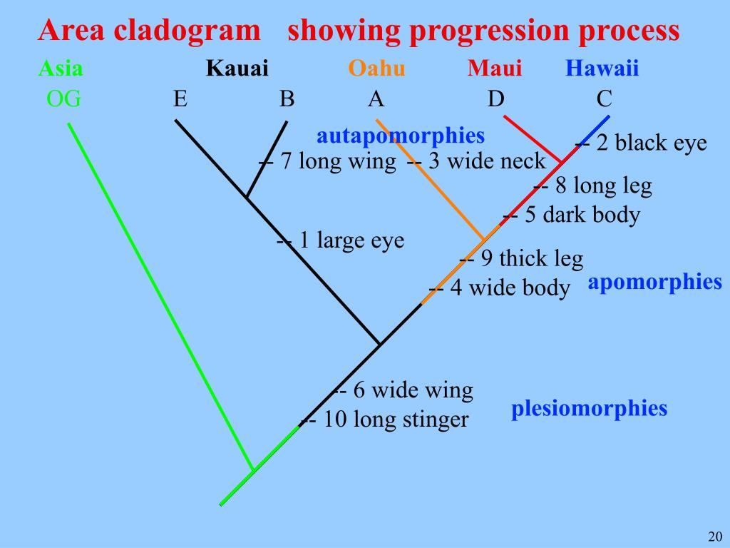 Area cladogram
