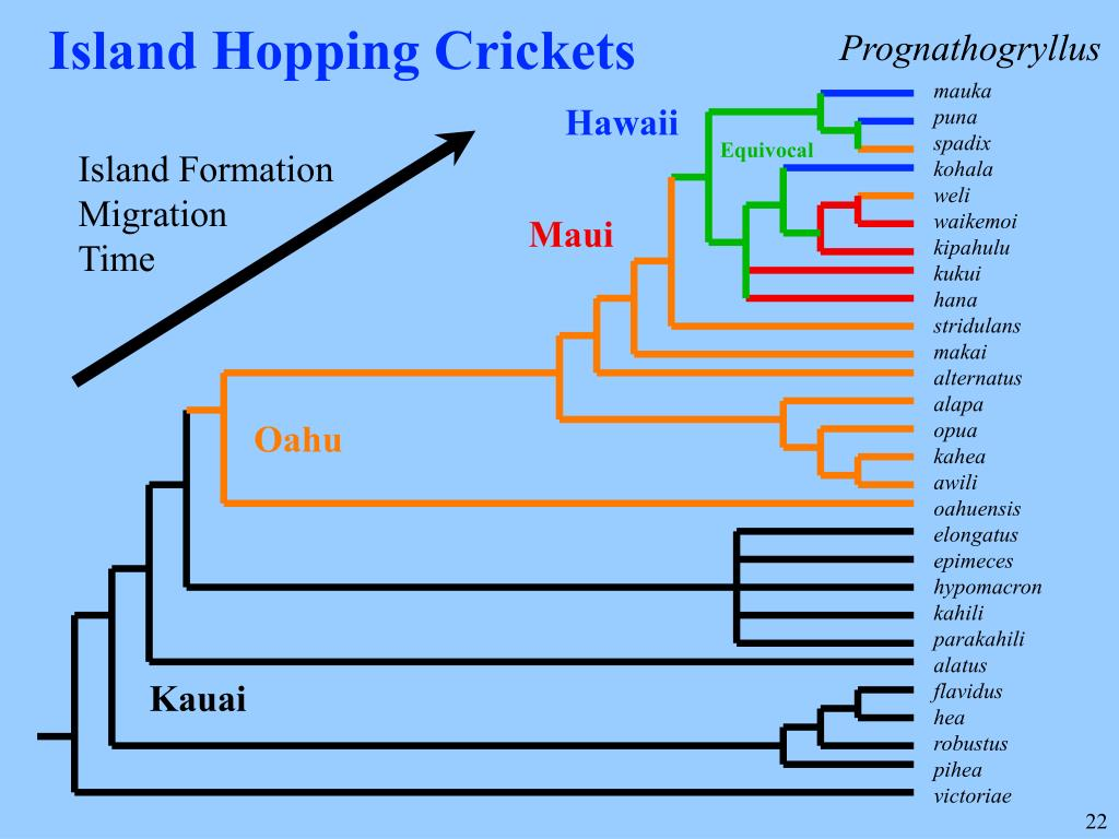 Island Hopping Crickets