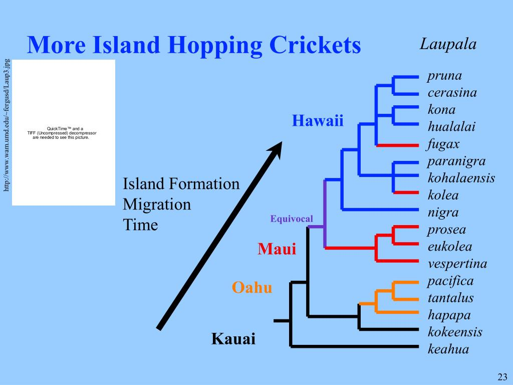 More Island Hopping Crickets