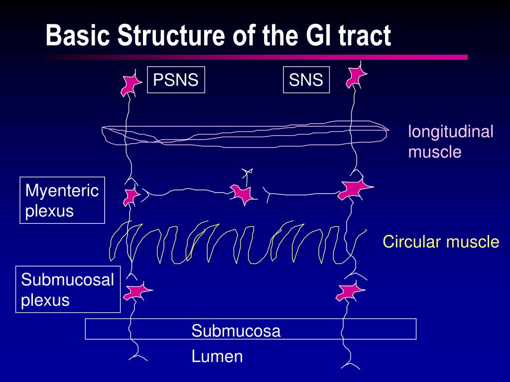 Basic Structure of the GI tract