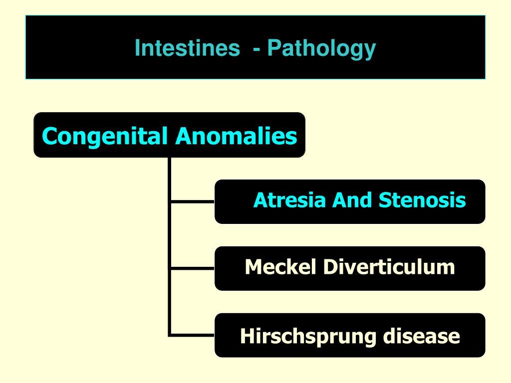 Intestines  - Pathology