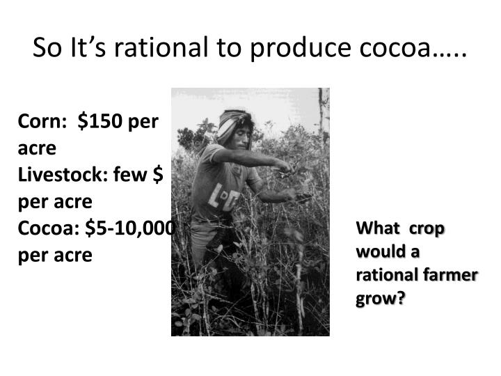 So It's rational to produce cocoa…..