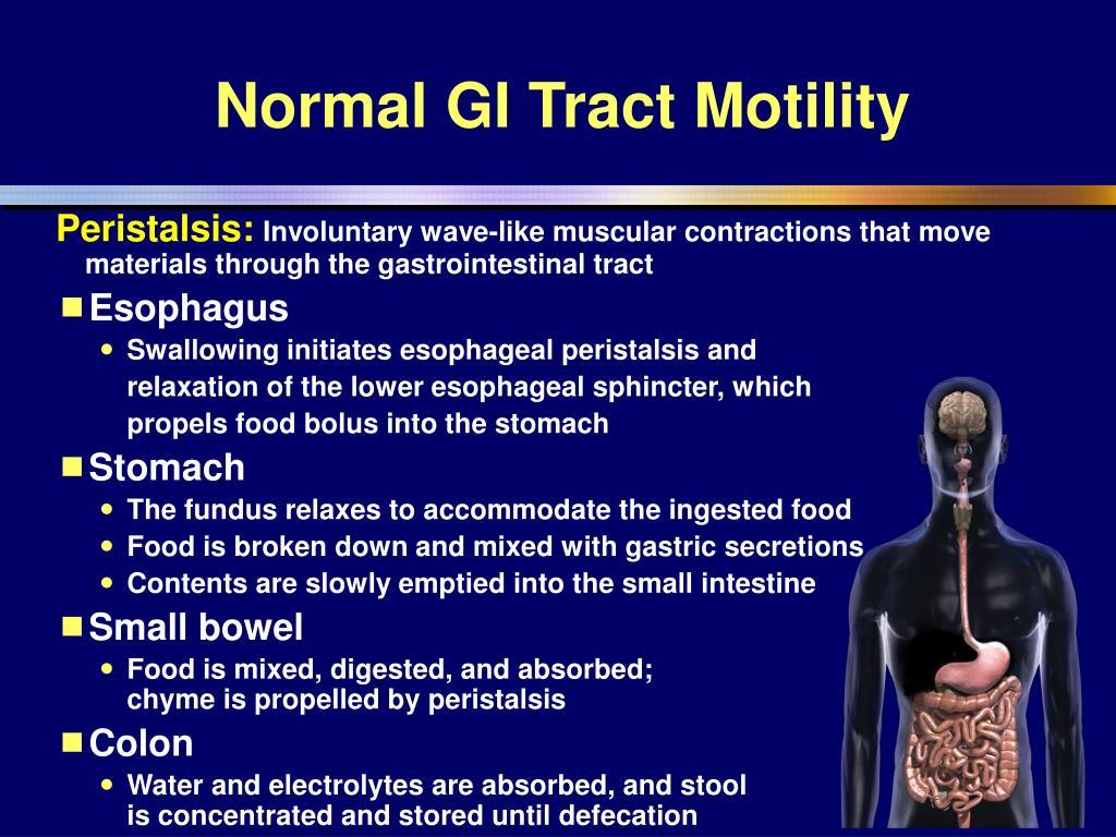 Normal GI Tract Motility