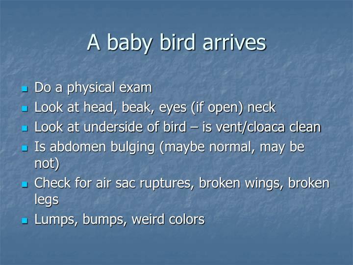 A baby bird arrives
