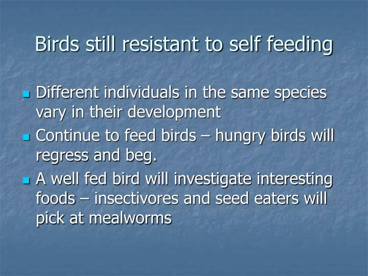 Birds still resistant to self feeding