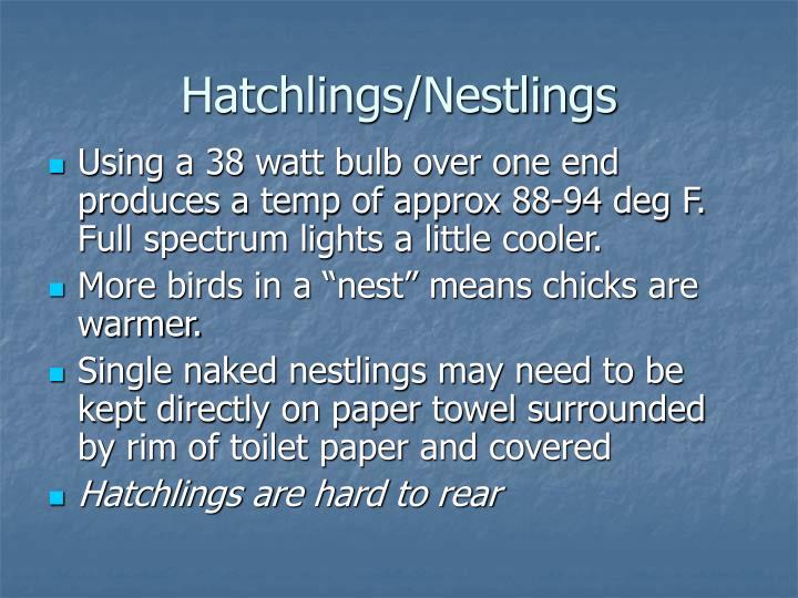Hatchlings/Nestlings