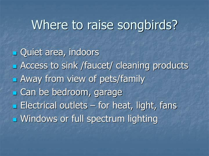 Where to raise songbirds?