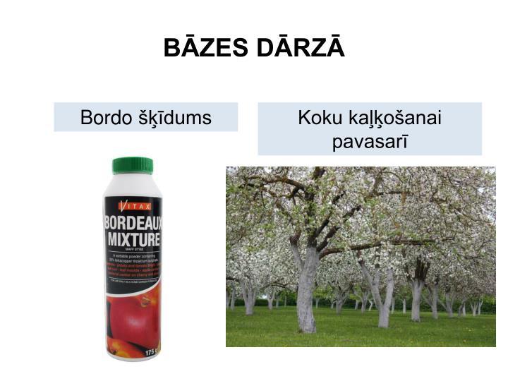 BĀZES DĀRZĀ