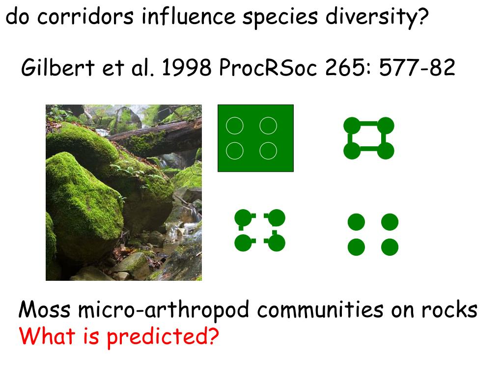 do corridors influence species diversity?