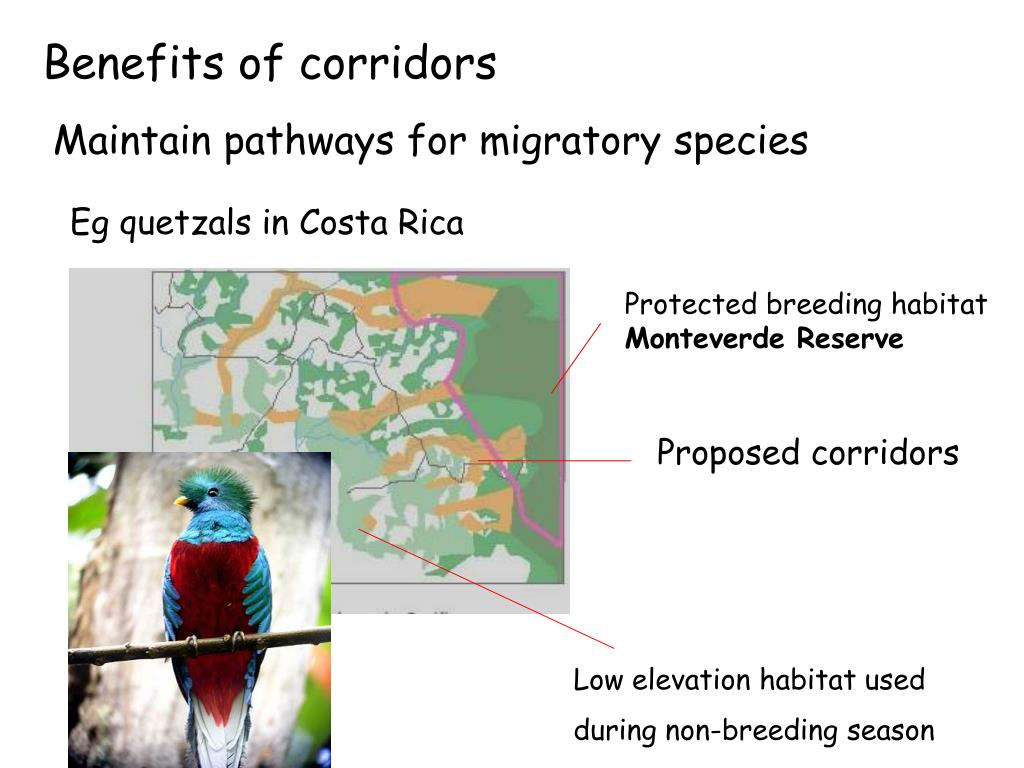 Benefits of corridors
