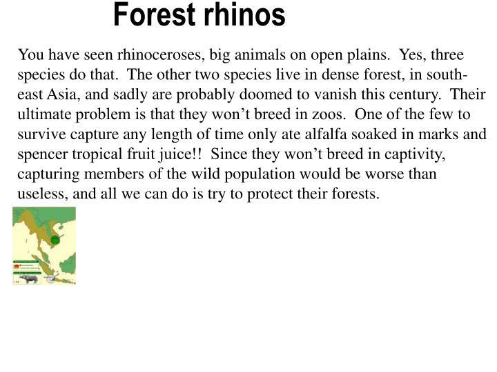 Forest rhinos