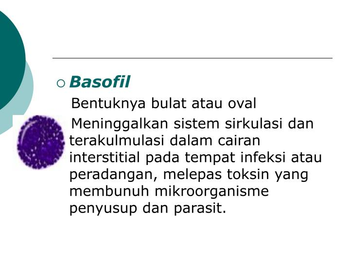 Basofil