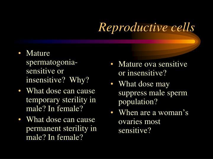 Mature spermatogonia-sensitive or insensitive?  Why?