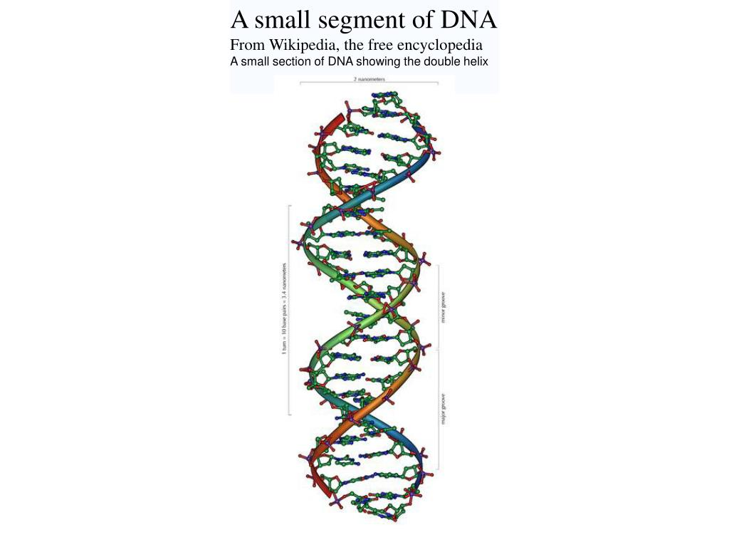 A small segment of DNA