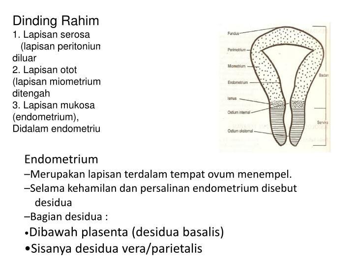 Dinding Rahim :