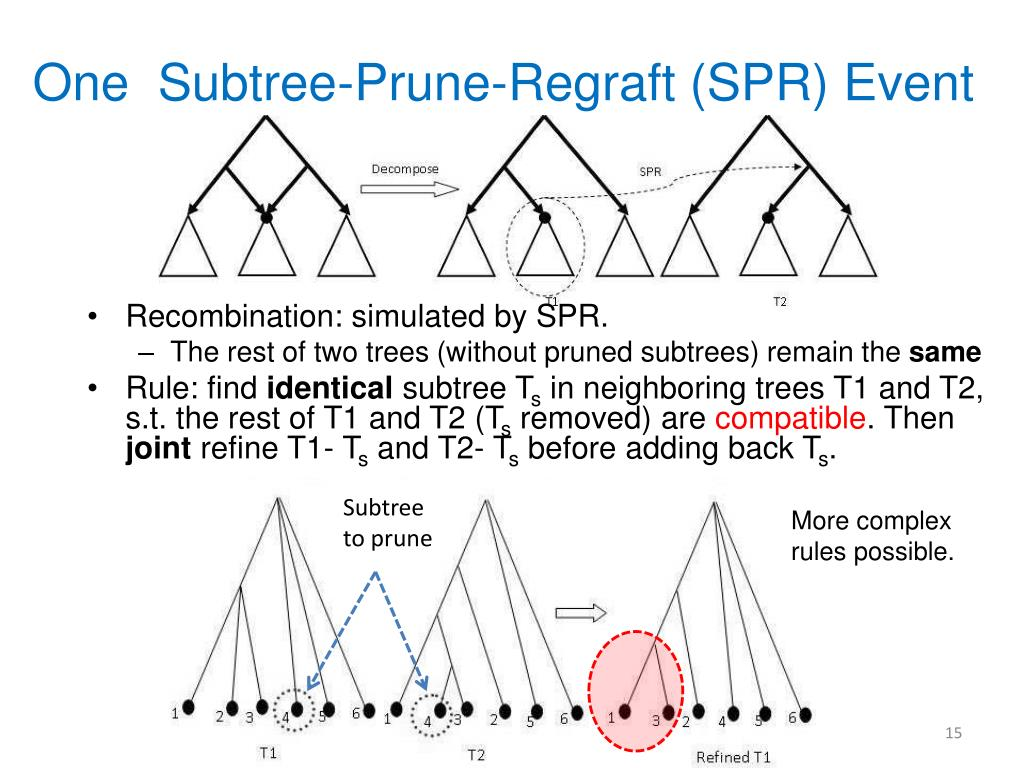 One  Subtree-Prune-Regraft (SPR) Event