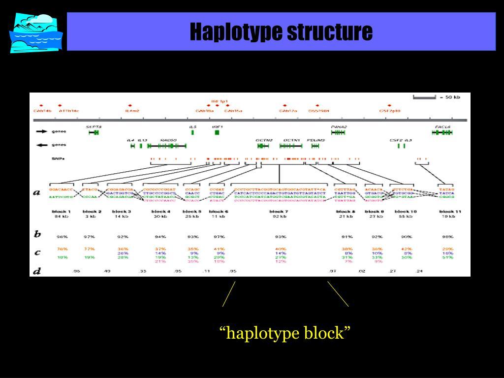 Haplotype structure