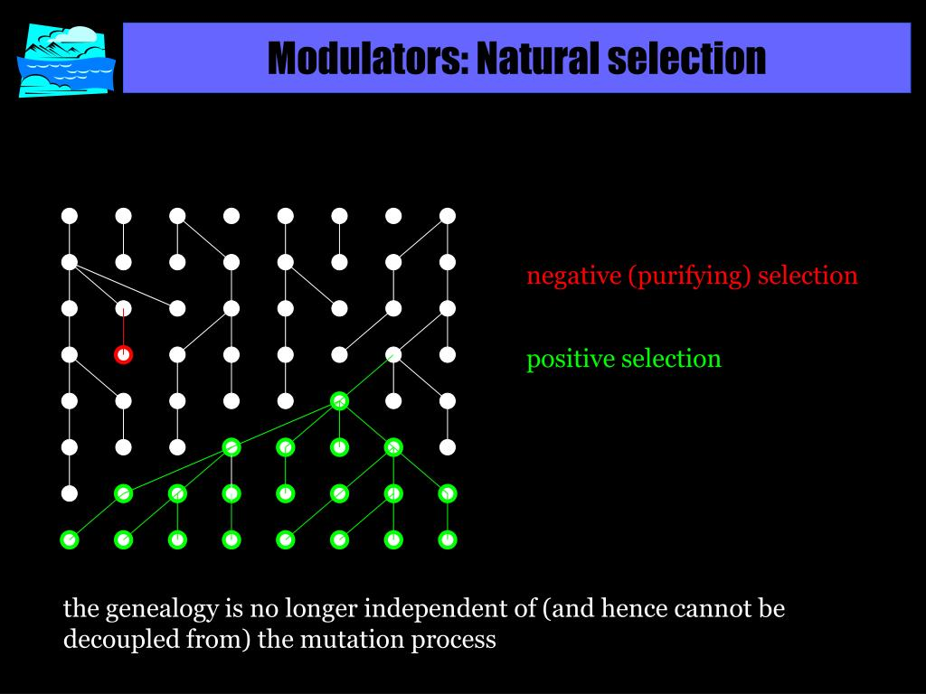 Modulators: Natural selection