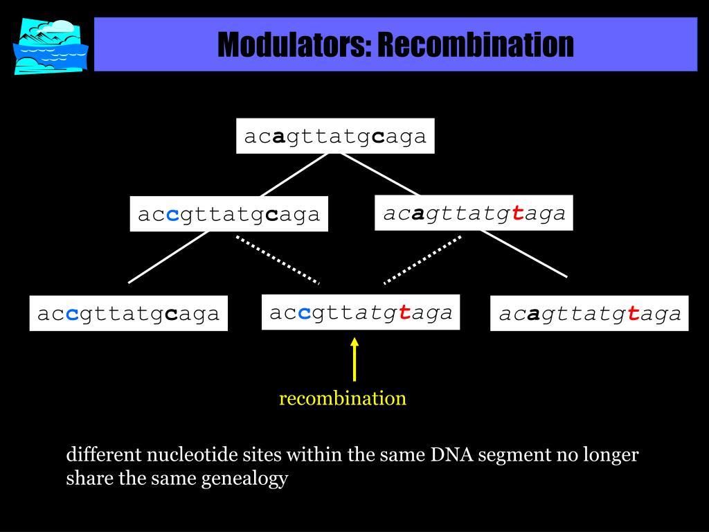 Modulators: Recombination