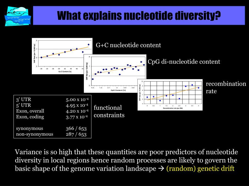 What explains nucleotide diversity?