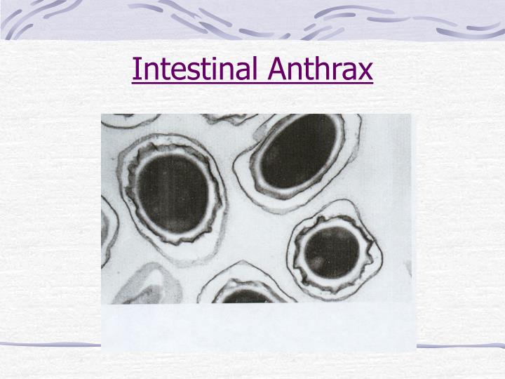 Intestinal Anthrax