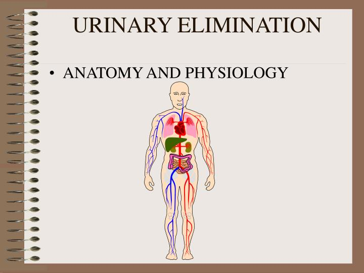 urinary elimination Bowel elimination elimination of bowel waste (defecation) is a basic human need and is essential for normal body function normal bowel elimination depends on several factors: a balanced diet, including high-fiber foods a daily fluid intake of 2000-3000 and activity to promote muscle tone and peristalsis.
