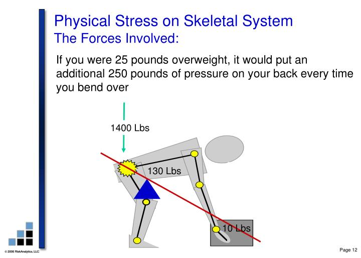 Physical Stress on Skeletal System