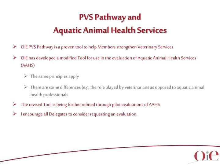 PVS Pathway and