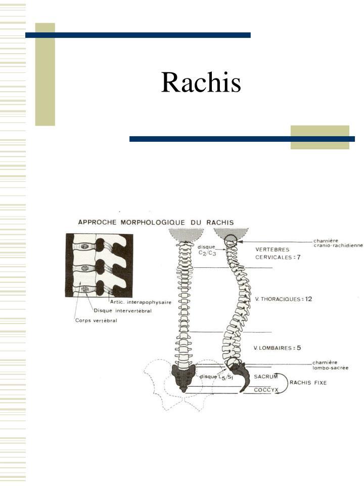 Rachis