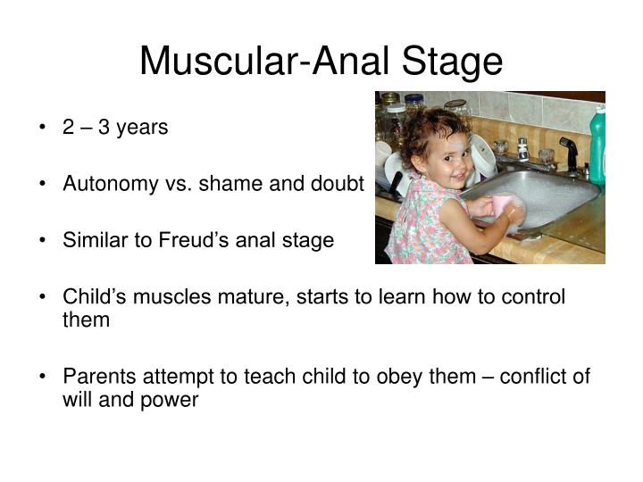 Muscular-Anal Stage