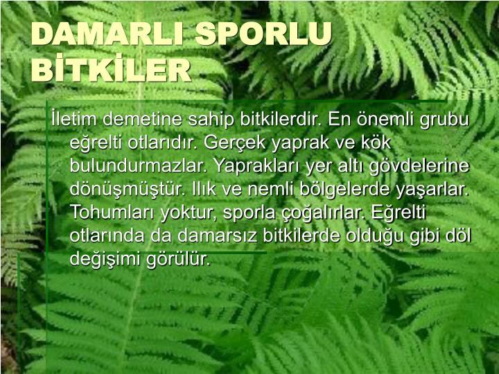 DAMARLI SPORLU BİTKİLER