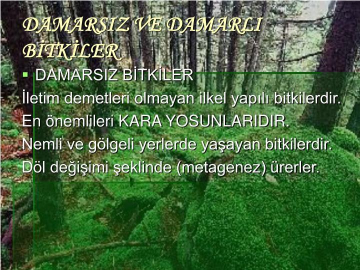 DAMARSIZ VE DAMARLI BİTKİLER