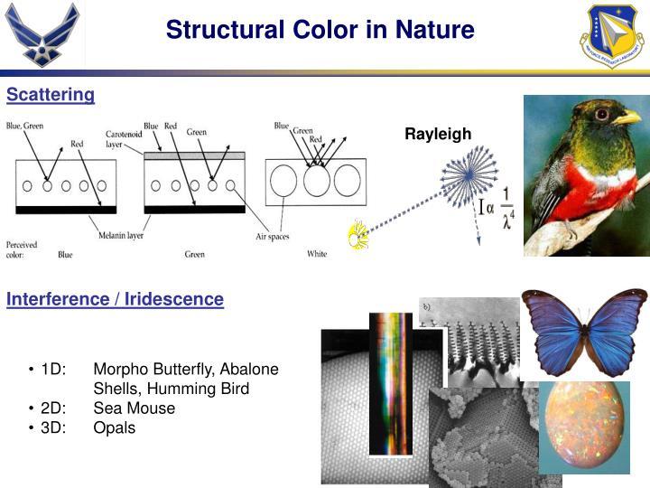 Interference / Iridescence