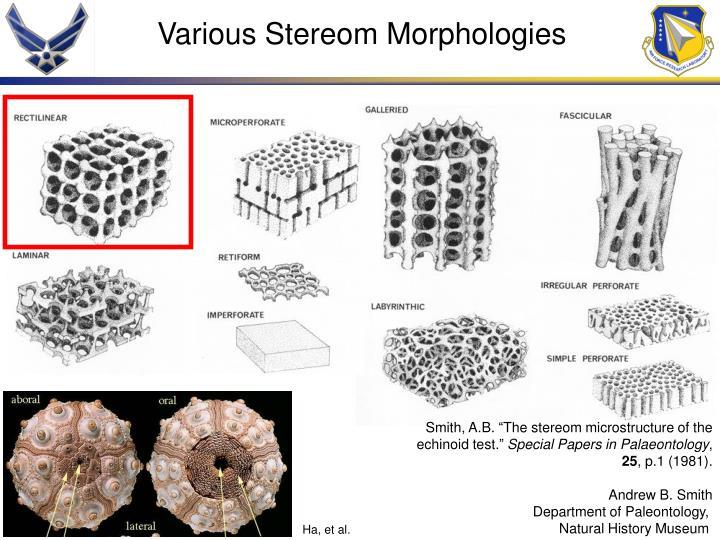 Various Stereom Morphologies