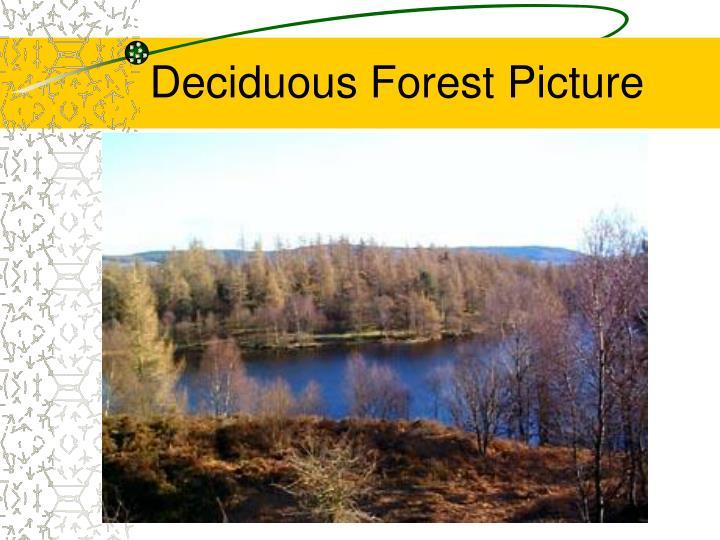 Deciduous Forest Picture