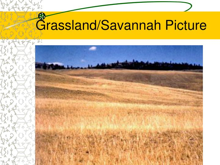 Grassland/Savannah Picture