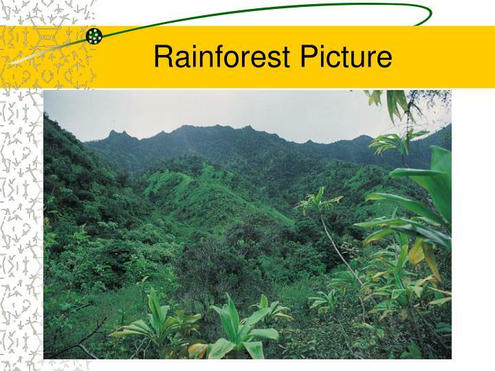 Rainforest Picture