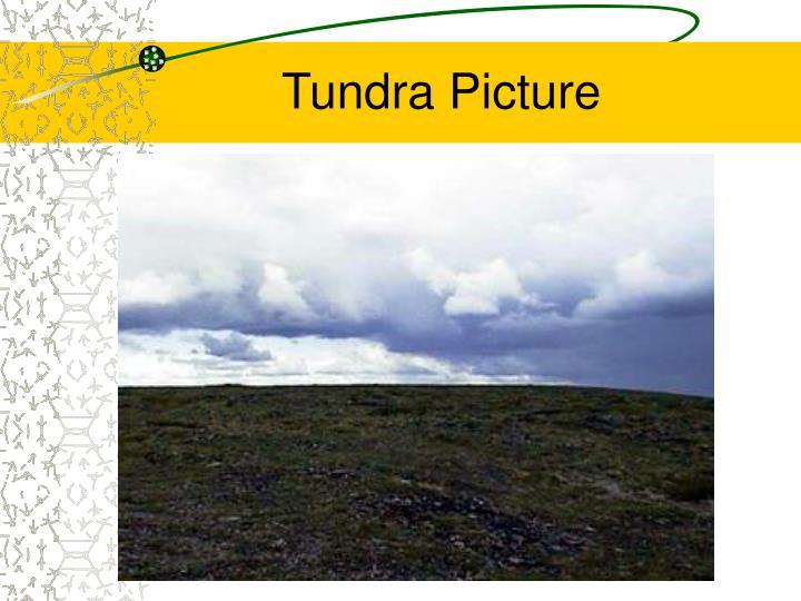 Tundra Picture