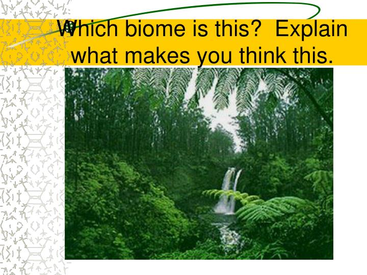 Which biome is this?  Explain what makes you think this.