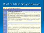 blat on ucsc genome browser