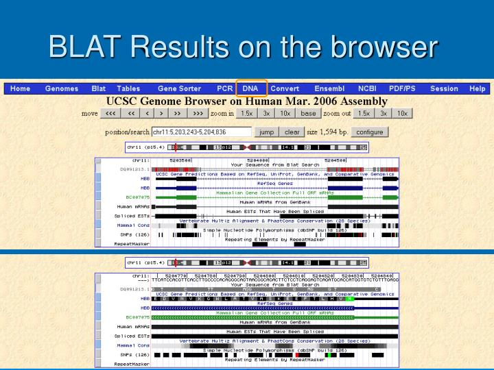 BLAT Results on the browser