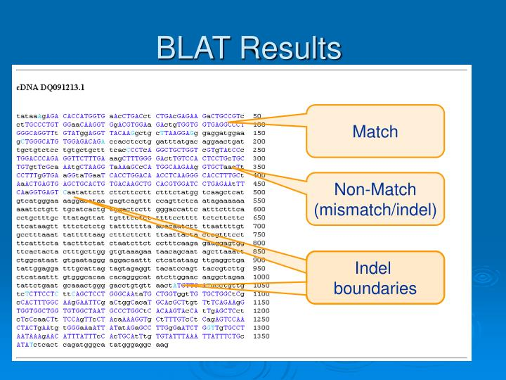 BLAT Results