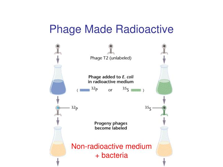 Phage Made Radioactive