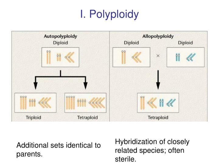 I. Polyploidy