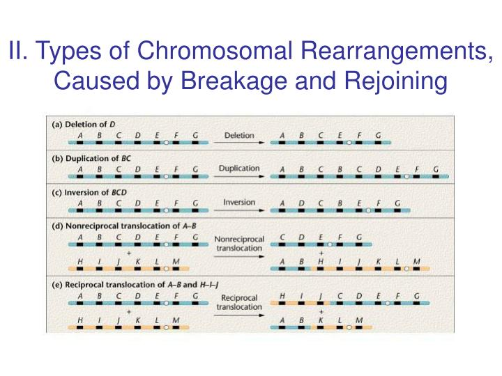 II. Types of Chromosomal Rearrangements, Caused by Breakage and Rejoining