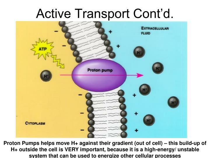 Active Transport Cont'd.