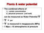 plants water potential1